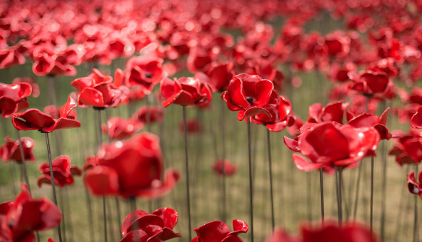 14-18 NOW ANNOUNCE 2015 HOST VENUES FOR ICONIC POPPY SCULPTURES