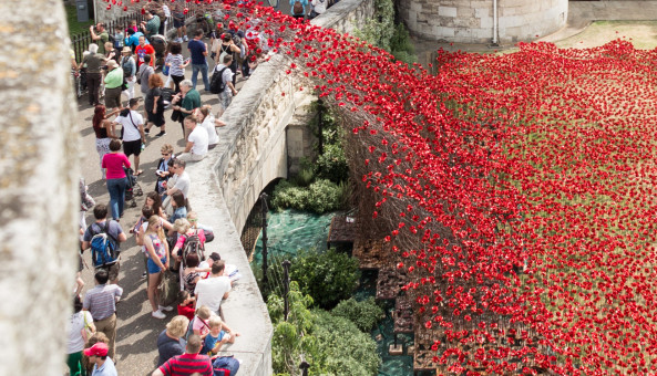 Poppies Expressions of Interest Press Release