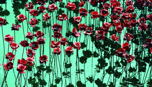 Poppies 2017 Expressions of Interest Press Release