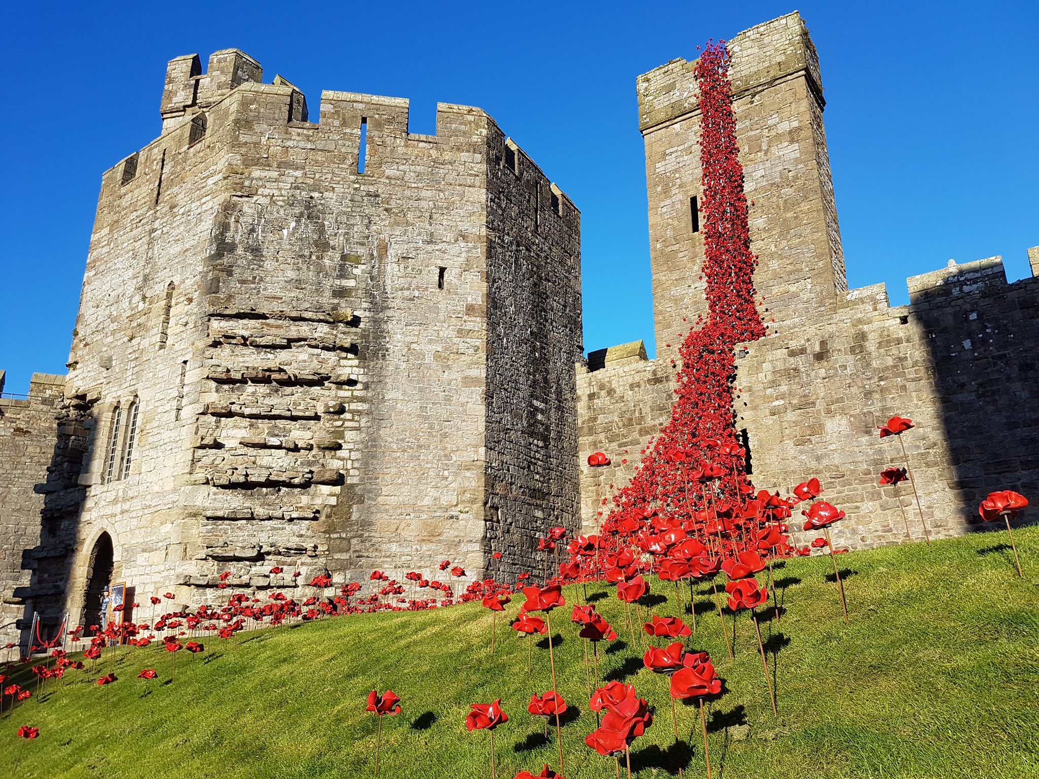 Poppies: Weeping Window