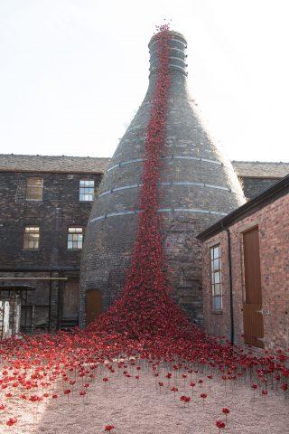 Poppies Open In Stoke